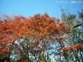 紅葉を撮りに高岡古城公園へ1