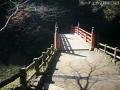 紅葉を撮りに高岡古城公園へ2