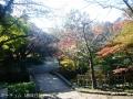 紅葉を撮りに高岡古城公園へ3