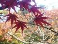 紅葉を撮りに高岡古城公園へ4