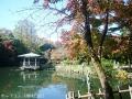 紅葉を撮りに高岡古城公園へ5