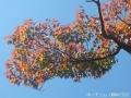 紅葉を撮りに高岡古城公園へ6