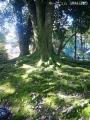 紅葉を撮りに高岡古城公園へ8