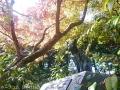紅葉を撮りに高岡古城公園へ9