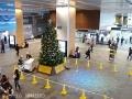 富山駅のクリスマスツリー点灯式1