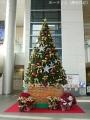 富山駅のクリスマスツリー点灯式3