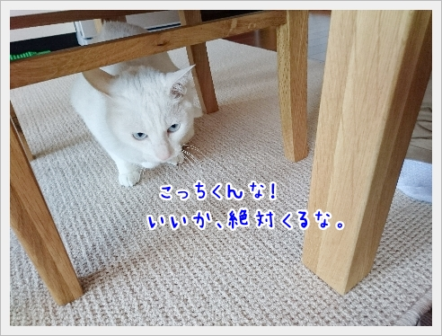 fc2_2017-05-25_07.jpg