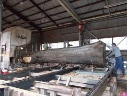 けやき大径木製材1
