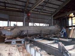 けやき大径木製材2