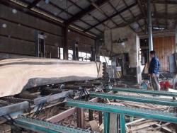 けやき大径木製材3