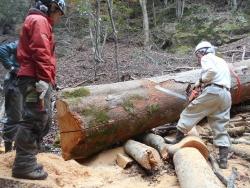 けやき大径木製材5