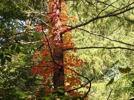 きれぎれの風彩 軽井沢野鳥の森 171026-01