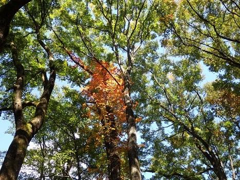 きれぎれの風彩 軽井沢野鳥の森 171026-02