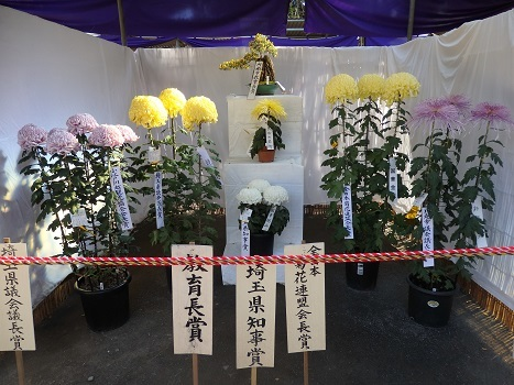きれぎれの風彩 小江戸川越菊まつり171201-01