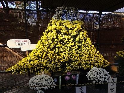 きれぎれの風彩 小江戸川越菊まつり171201-11