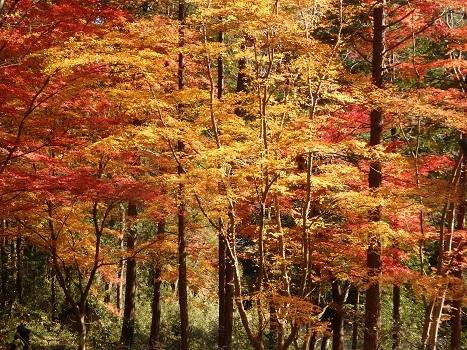 きれぎれの風彩 嵐山渓谷の紅葉 171216-6