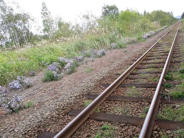 線路秋花紫