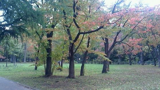 紅葉円山公園