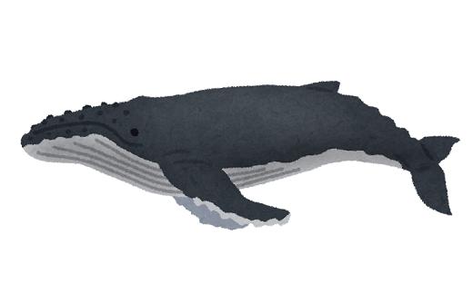 鯨くじらクジラ