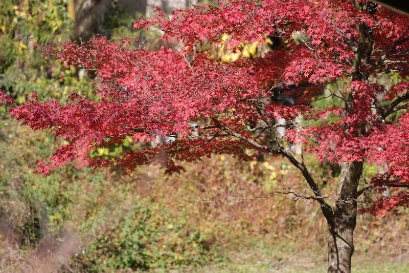 s-東公園・山神ダム17.11.20 010