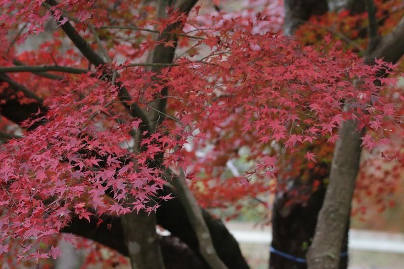 s-東公園・山神ダム17.11.25 108