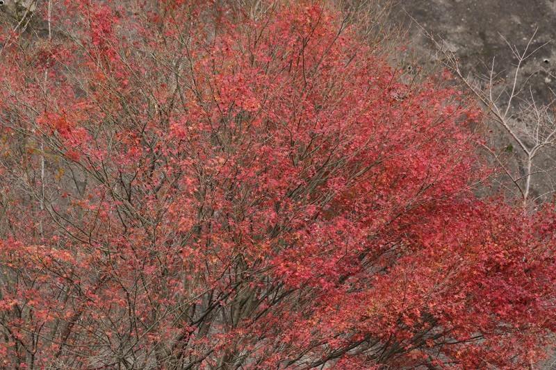 s-東公園・山神ダム17.11.25 103