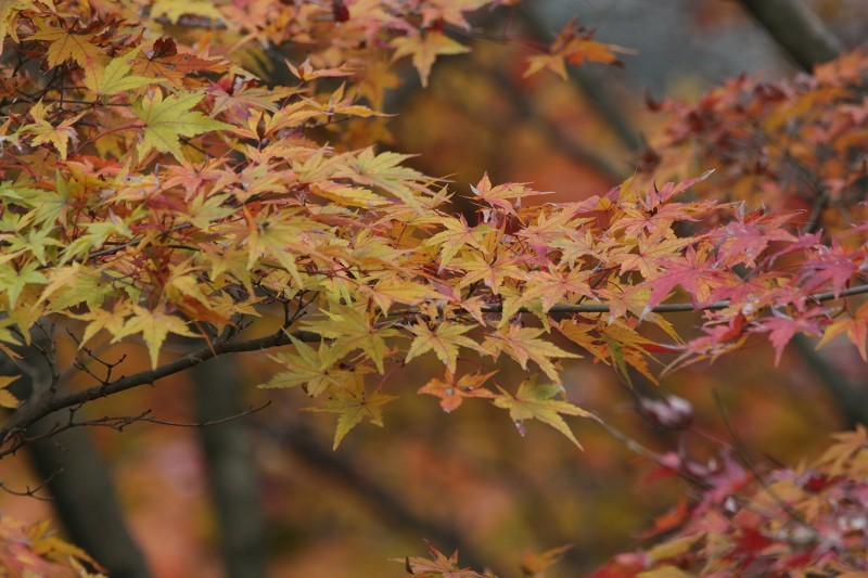 s-東公園・山神ダム17.11.25 111