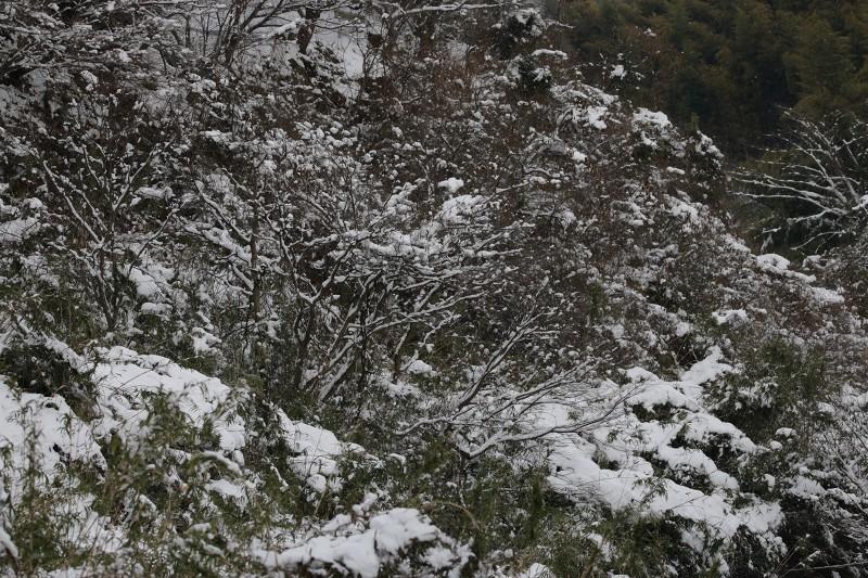 s-東公園・山神ダム18.1.12 059