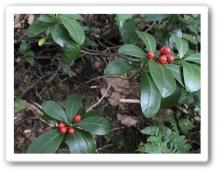 20170922 別山 白山 高山植物 (4)
