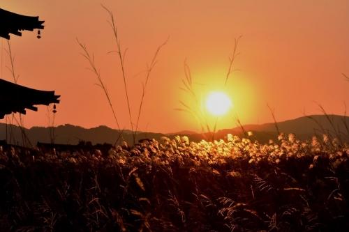 平城宮跡夕陽3