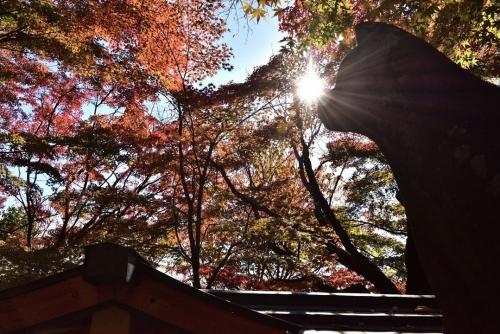 瑜伽神社4