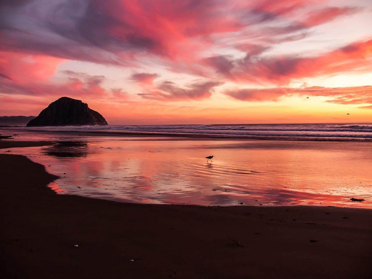 beach-731156_1280.jpg