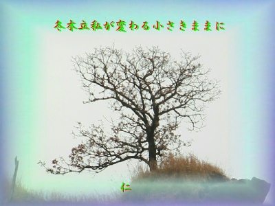 フォト平和の砦575『 冬木立私が変わる小さきままに 』zry0603