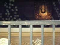 2017-06-24平泉・毛越寺あやめ祭り190