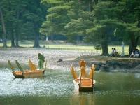 2017-06-24平泉・毛越寺あやめ祭り208