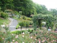 2017-06-11花巻温泉のバラ園250