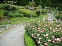 2017-06-11花巻温泉のバラ園249