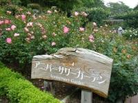 2017-06-11花巻温泉のバラ園248