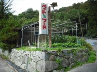 2017-10-14カラ&ミケ03