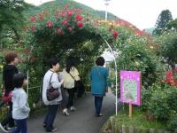 2017-06-11花巻温泉のバラ園260