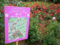 2017-06-11花巻温泉のバラ園259