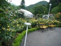 2017-06-11花巻温泉のバラ園255