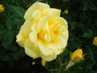 2017-06-11花巻温泉のバラ園256