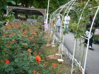 2017-06-11花巻温泉のバラ園265