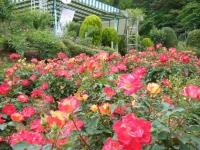 2017-06-11花巻温泉のバラ園261