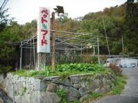 2017-11-02カラ&ミケ03