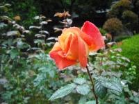 2017-09-30秋のバラ園046