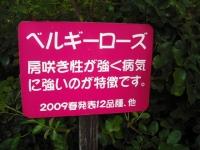 2017-09-30秋のバラ園099