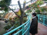 2018-01-14花と泉の公園ベゴニア館34