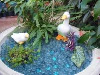 2018-01-14花と泉の公園ベゴニア館33